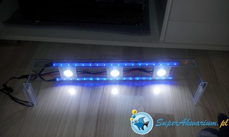 Start krewetkarium na lampie LED DIY - Słodkowodne i ...