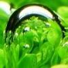 Lista roślin cieniolubnych. - ostatni post przez emiloos