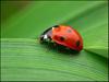 Metody: kontrola glonów czy uprawa roślin? - Tom Barr - ostatni post przez mei