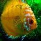 Jakie oswietlenie do akwarium 240L - nietypowa obudowa - ostatni post przez xsiasia