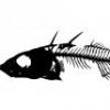 Świderek ślimak (Melanoides tuberculata) - ostatni post przez Nantai