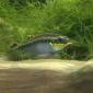 Coś w akwarium zmiękcza i zakwasza wodę - ostatni post przez Sayuri