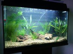 Pierwsze 3- dniowe akwarium