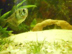 Król akwarium