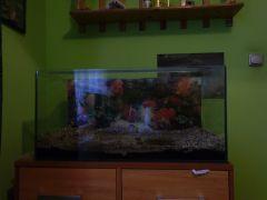 Uszkodzone akwarium