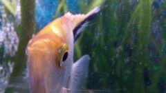 moje ryby