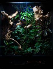terrarium gekonów orzęsionych