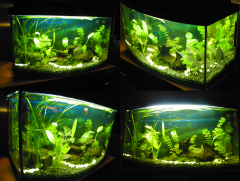 Początki z akwarium