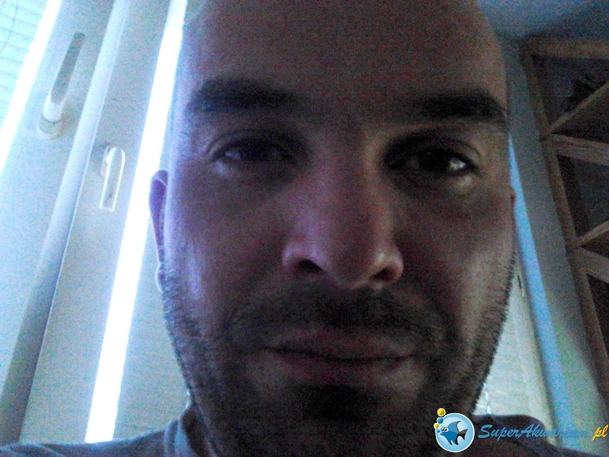 post-14616-0-44691000-1439062099_thumb.jpg