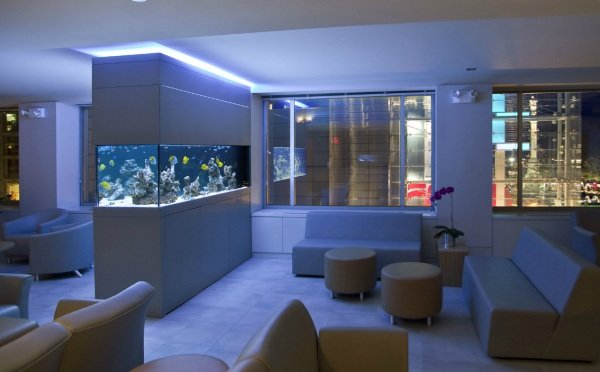 An-aquarium-at-night.jpg